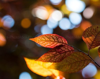 Orange autumn leaves photography, fall scene home decor, brown red photography fine art, wood nature wall art, glowing foliage, bokeh effect