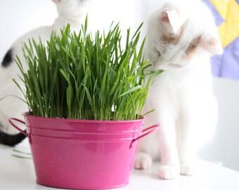 Cat Grass 25 gr over 1500 - 1700 seeds Fresh natural Organic from medditerrean seeds