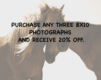 Purchase any 8x10 from my gallery of wild horse photos and receive 20% off