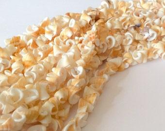 "Natural Shell Beads Conus Shell 16"" strand"