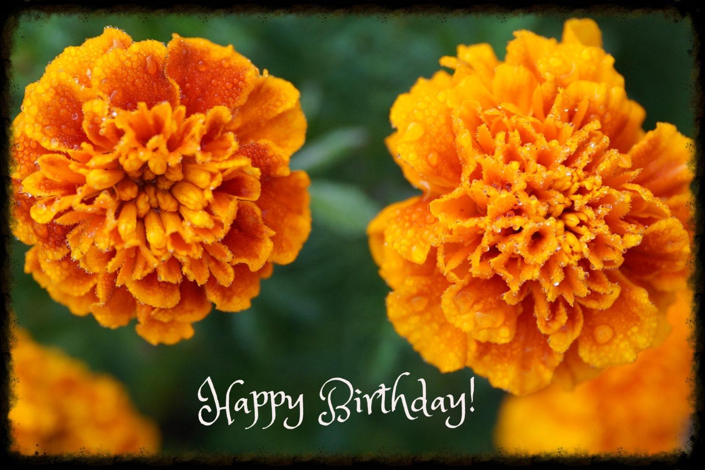 Symbol Birthday October Marigold Greeting Card Nature