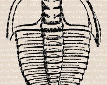 Vintage Trilobite Clip Art - Fossil Clip Art - Trilobite Illustration – Fossil Digital Stamp -  Trilobite Graphic – commercial use
