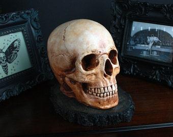 """Human skull sculpture - handmade skull figure - """"JUSTIN"""""""
