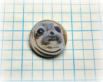 Awkward seal  - pinback button or magnet 1.5 Inch