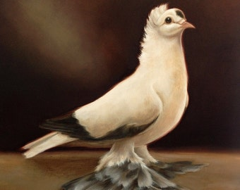 "Original signed oil painting on MDF, ""Saxon Swallow Pigeon"""