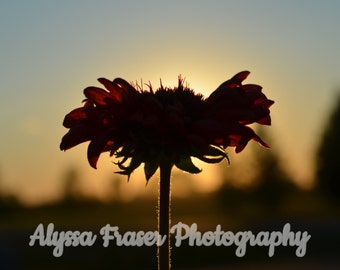 Flower Photography Wall Art