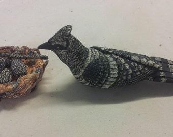 Blue Jay w/nest