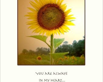 Sunflower-A