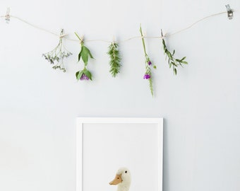Duck print - Modern nursery animals - White duck print - Duck photography - nursery wall art - Modern decor - Nursery decor