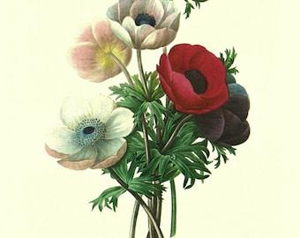 Vintage botanical print Digital download.Anemones by Pierre Redoute.Printable digital flowers.Redoute Botanical Print.Digital Art  Download