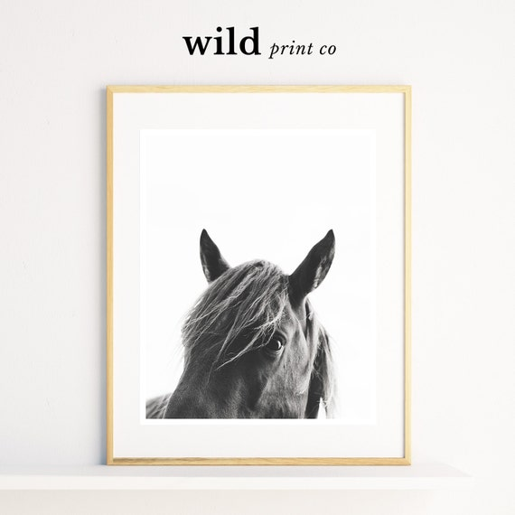 Wall Art Black Horse : Horse wall art print black and white photography
