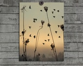 Flora, Archival Print, Nature Art, Birds In Motion, Sky, Animals, Ethereal Photograph, Abstract - Distant Birds
