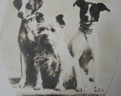 Antique circus dogs photo postcard, antique dog photo postcard, vintage dog postcard, French photo postcard, dogs, circus dogs