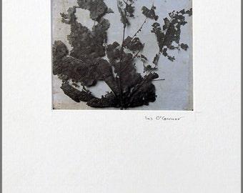 Autumn leaf - mounted print