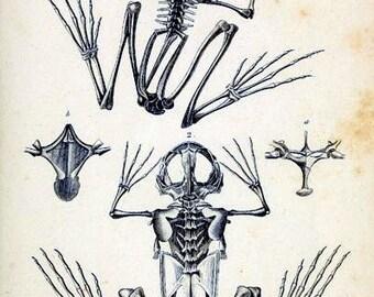 Frog Skeletons Notecard Halloween Handmade Vintage Image