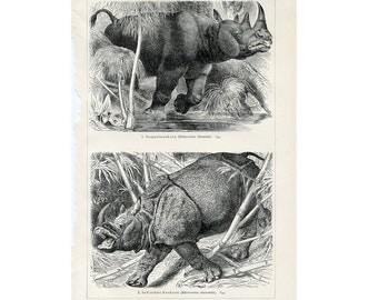 1894 rhinoceros original antique african & asian animal print