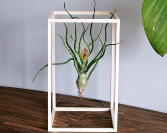Life Boxed In // Air Plant Minimalist Art // Desk Plant // Wood Sculpture, tillandsia, home decor, plant holder, living home decor, gift
