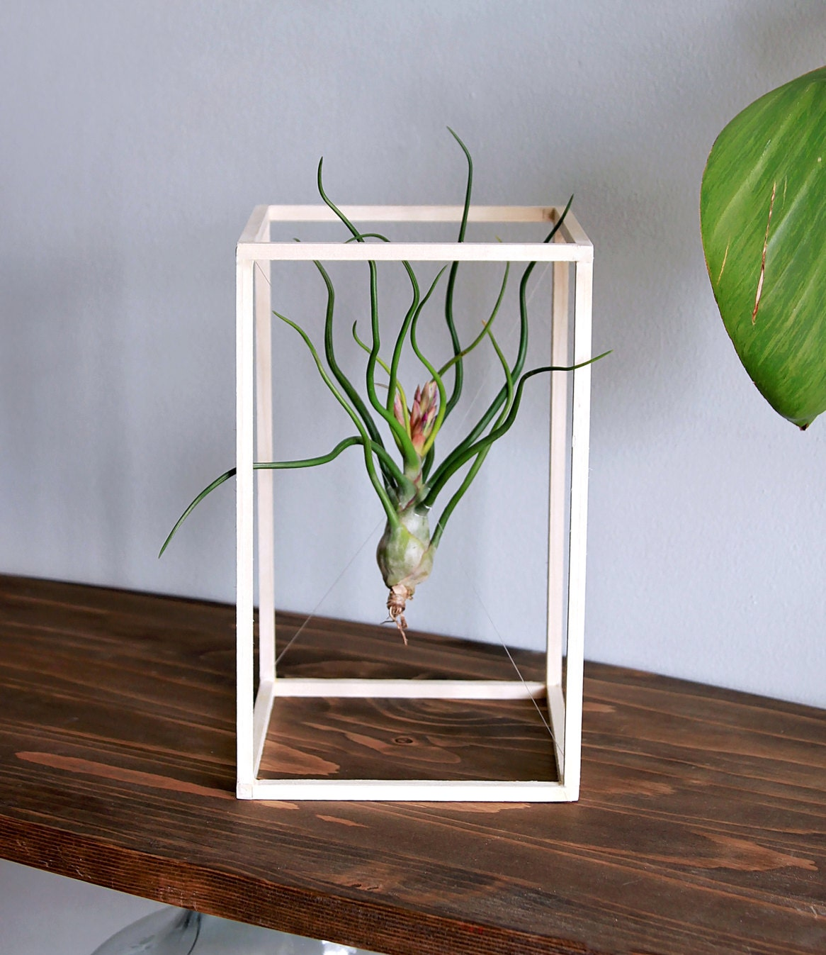 Life Boxed In // Air Plant Minimalist Art // Desk Plant // Wood