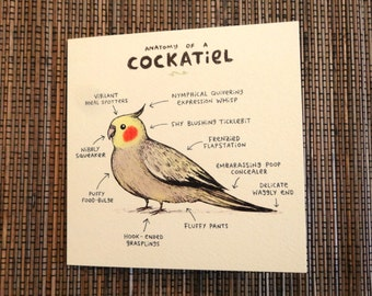 Anatomy Of A Cockatiel Card