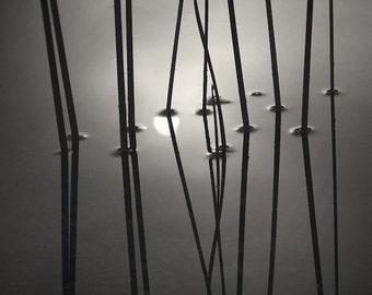 black and white photography, abstract photography, nature photography, Reeds and Sun Reflection