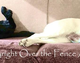 Labrador Couch Nappers Note Card Lounge Lizards Black Labrador Yellow Labrador