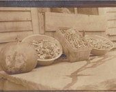 Pumpkin and Mushrooms- 1900s Antique Photograph- Fall Harvest- Edwardian Snapshot- Found Photo- Real Photo Postcard- RPPC- Paper Ephemera
