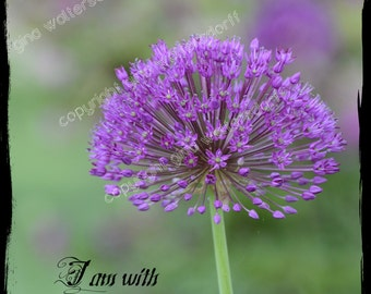 Purple Onion inspirational bible Matthew 28-20 I am with you always scrapbook gift giving 8x10 11x14 16x20 Bucks County by Gina Waltersdorff