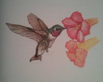 Humminbird Print