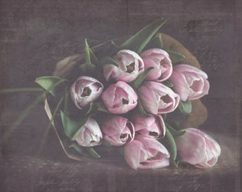 Tulips, Soft, Pink, Flowers, Floral Print, Fine Art Photography, 11x14