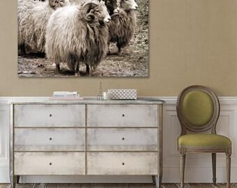 Sheep Canvas, Animal Photography, Monochrome, Nature, Canvas Art Print, Black and White, Large Wall Decor, Sheep Art, Farm Photo, Rustic Art