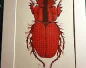 Red Bug or Beetle