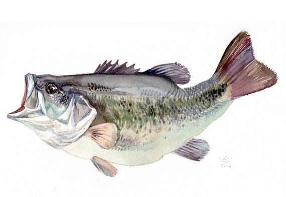 11x14 bass fish painting giclee print of original watercolor for Bass fish painting