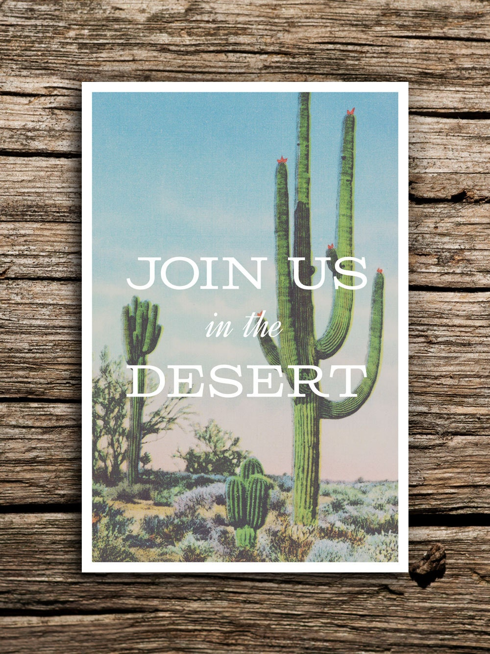 join us in the desert postcard save the dates      wedding