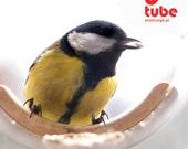Bird feeder, Hanging bird feeder, Window bird feeder, Clear bird feeder, Modern bird feeder, Birdwatching, Minimalist, Small bird, Tube
