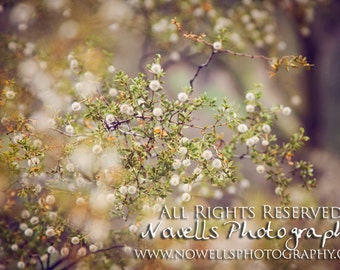 Dreamy Desert Creosote Bush Photography - Southwest Nature Fine Art Print - Arizona Spring Photograph