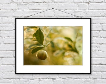 Kitchen Wall Art, Citrus Photo Print, Summer Kitchen Art, Dining Room Art, Yellow Green Food Art Print, Lemon Photography