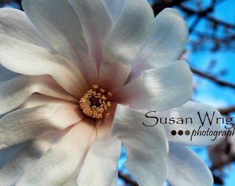 Flower Photography, Wall Art, Nature Print, Home Decor, White, Art Photography, Print, Wall Picture, Nature Photography