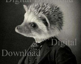 Mr. Hedgehog Digital Download Photo