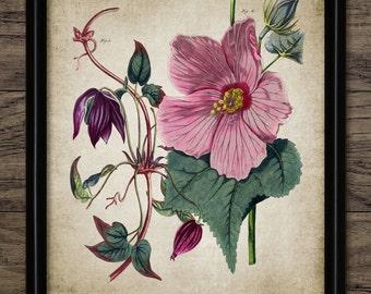 Hibiscus Plant Print - Plant Illustration - Botanical Flower Art - Digital Art - Printable Art - Single Print #209 - INSTANT DOWNLOAD