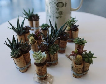 Wine Cork Succulent Trio, Up-Cycled Wine Corks, Succulents, Cactus Potted, Planted