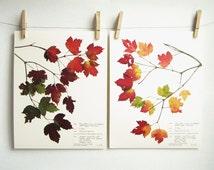 Fall Maple Leaves Print Set, #217ab, fall home decor autumn home decor fall leaves art pressed leaves art botanical print set 8x10 11x14 set