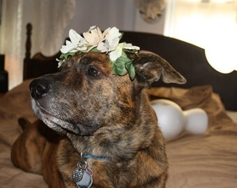 White Flower Crown for Big Dogs