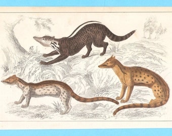 Antique animal (not sure what these are) illustration