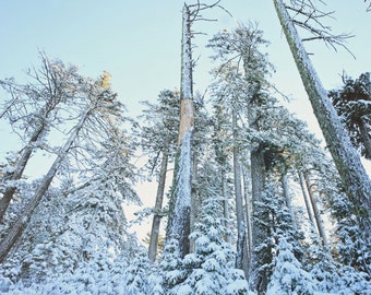 Nature photography, winter, snow, trees, winter wonderland - Snow 03