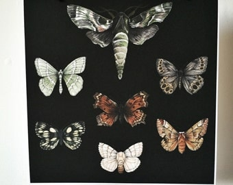 Moths and Butterflies - giclée print natural history entomology
