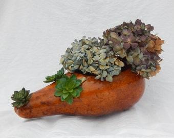 Hedgehog Gourd Planter