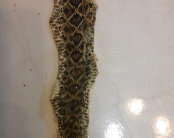 Rattle Snake Hide
