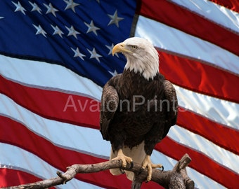A symbol of America the bald eagle
