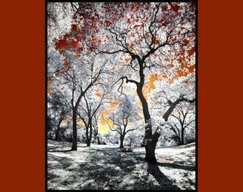 Orange Sky, Infrared Fine Art Photography, Metallic Paper  / Metal Print