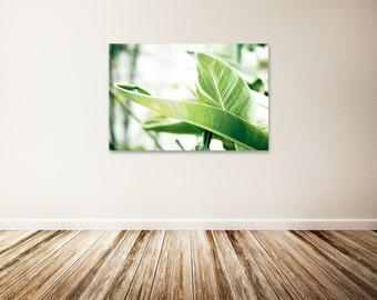 "Botanical Canvas Art, Banana Leaves, Nature Photography, Green Wall Decor, Large Canvas Wall Art - ""Banana Leaves"""